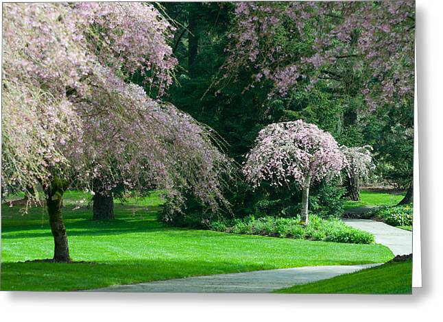 Greeting Card featuring the photograph Walk Under The Cherry Blossoms by Sabine Edrissi