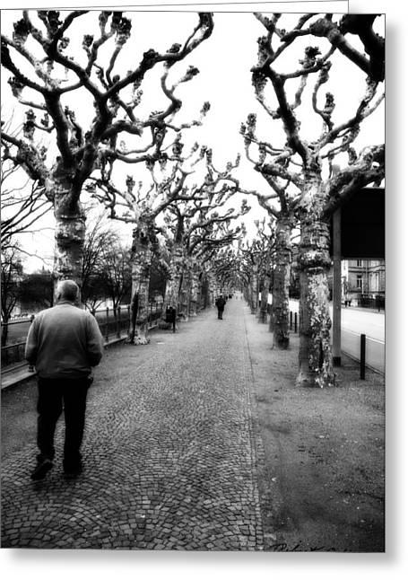 Greeting Card featuring the photograph Walk Under The Trees II by Robert Culver