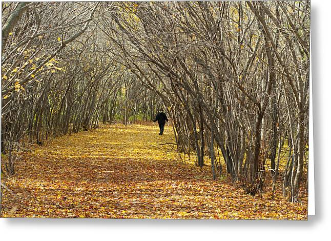 Walking A Golden Road Greeting Card