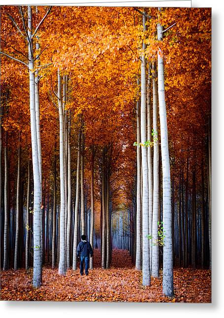 Walking Among Giants Greeting Card