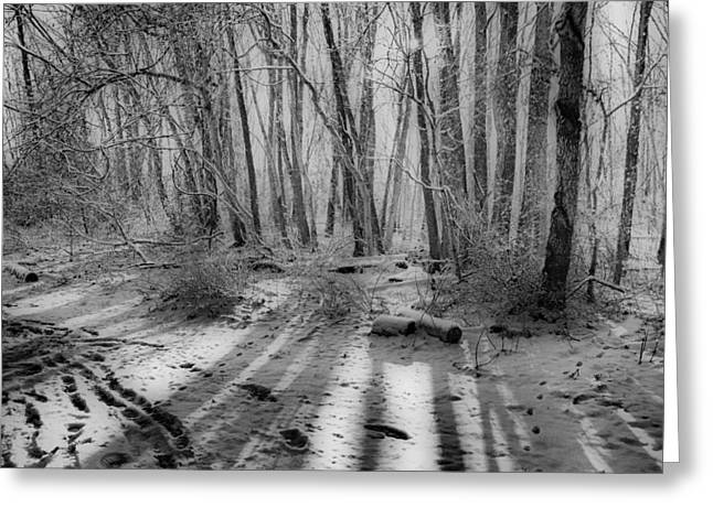 Walking  Amongst Shadows Greeting Card by Thomas  MacPherson Jr