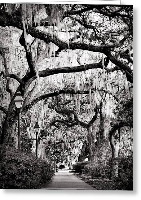 Walking In Forsyth Park In Black And White Greeting Card
