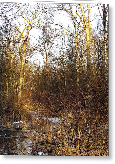 Walking Into A Sublime Woodland Has Its Brilliant Rewards Greeting Card by Terrance DePietro