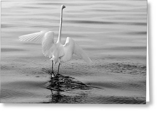 Greeting Card featuring the photograph Walking On Water by Daniel Woodrum