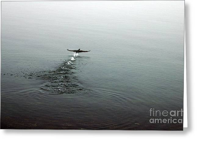 Greeting Card featuring the photograph Walking On Water by Randi Grace Nilsberg