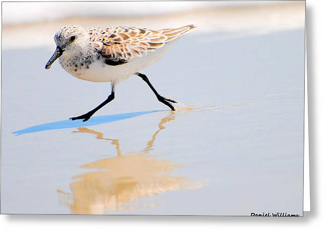 Walking Shorebird  Greeting Card