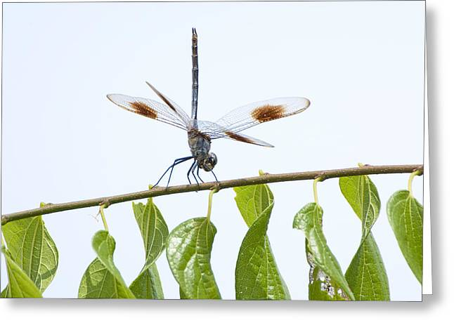 Walking The Tightrope Greeting Card by Bonnie Barry