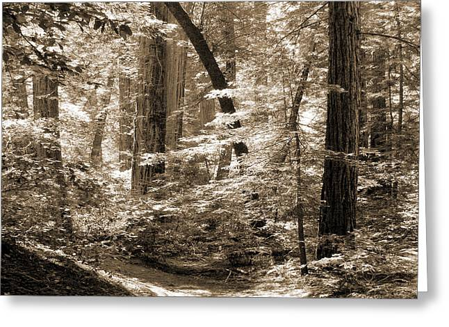 Walking Through The Redwoods Greeting Card by Mike McGlothlen