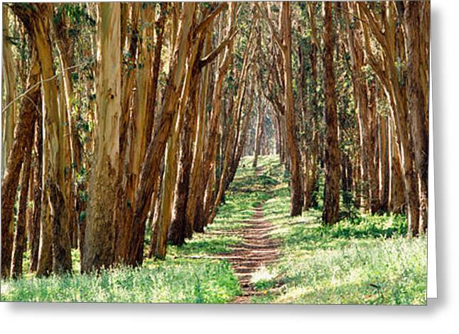 Walkway Passing Through A Forest, The Greeting Card