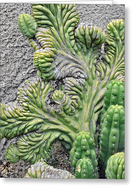 Wall Cactus Greeting Card by Misty Stach