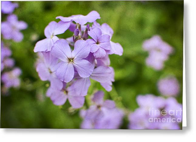 Greeting Card featuring the photograph Wallflowers Get Attention by Maria Janicki