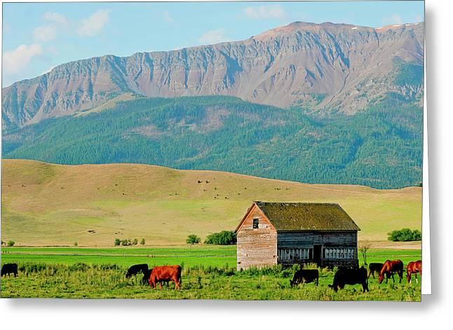Wallowa Mountains And Barn In Field Greeting Card by Nik Wheeler