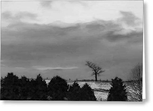 Walnut Tree In Bw Greeting Card