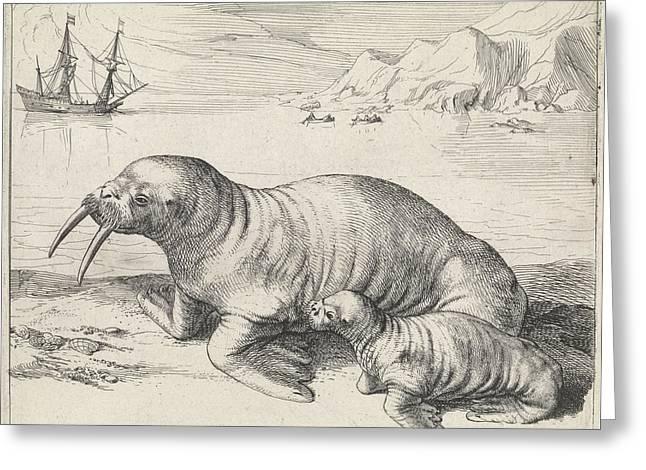 Walrus In Spitsbergen Svalbard Norway, Hessel Gerritsz Greeting Card