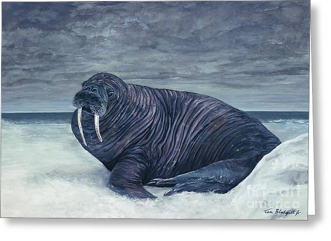 Walrus Greeting Card