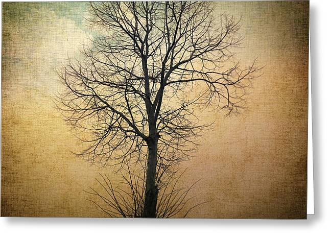 Waltz Of A Tree Greeting Card by Taylan Apukovska