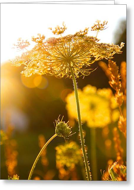 Warmth Of The Sun Greeting Card