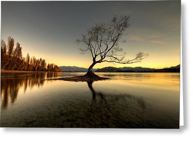 Wanaka - That Tree 1 Greeting Card