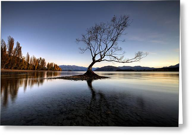Wanaka - That Tree 2 Greeting Card by Brad Grove