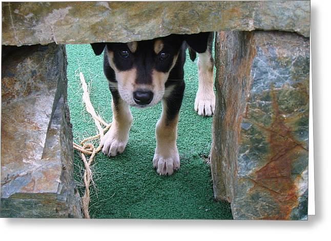 Wannabe Sled Dog In The Yukon Greeting Card by Richard Rosenshein