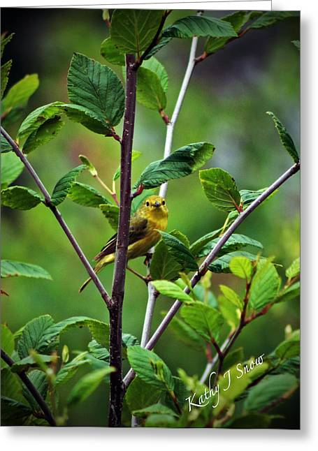 Warbler In The Alders Greeting Card by Kathy J Snow
