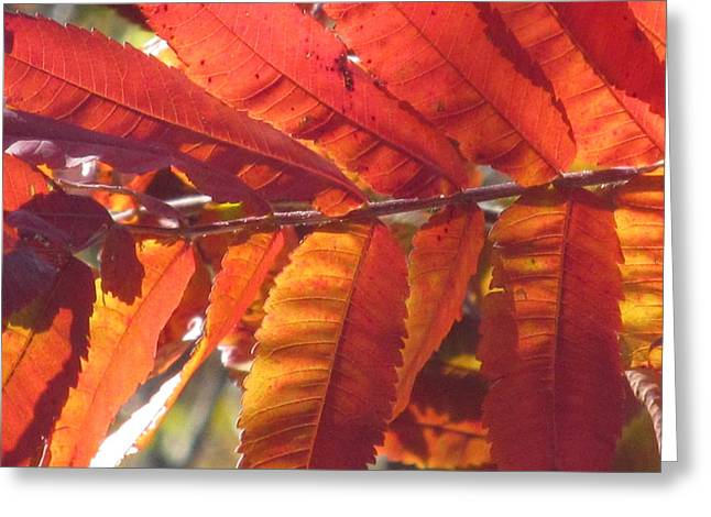 Warm Autumn Sun Greeting Card by Loretta Pokorny