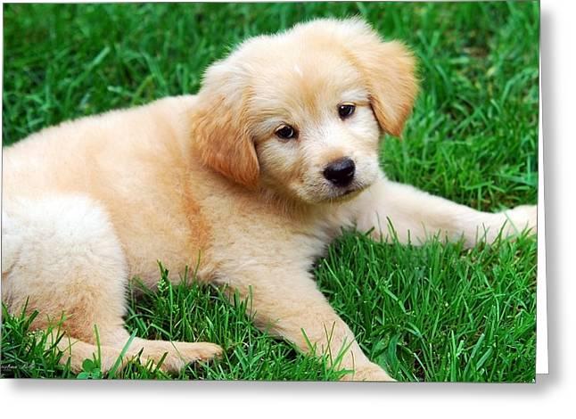 Warm Fuzzy Puppy Greeting Card by Christina Rollo