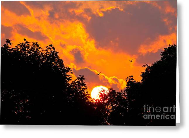 Warm Summer Sunset Greeting Card by Jay Nodianos