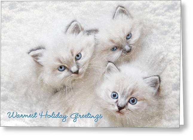 Warmest Holiday Greetings Greeting Card by Lori Deiter