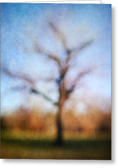 Warner Park Tree Greeting Card by David Morel