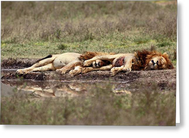 Warriors At Rest Greeting Card