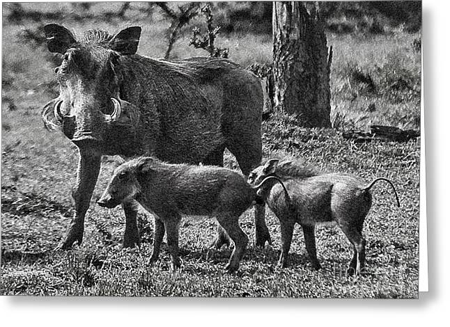 Warthog Family  Greeting Card by Gary Keesler