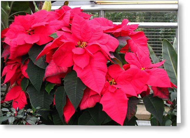 Washington Dc - Us Botanic Garden. - 121210 Greeting Card by DC Photographer