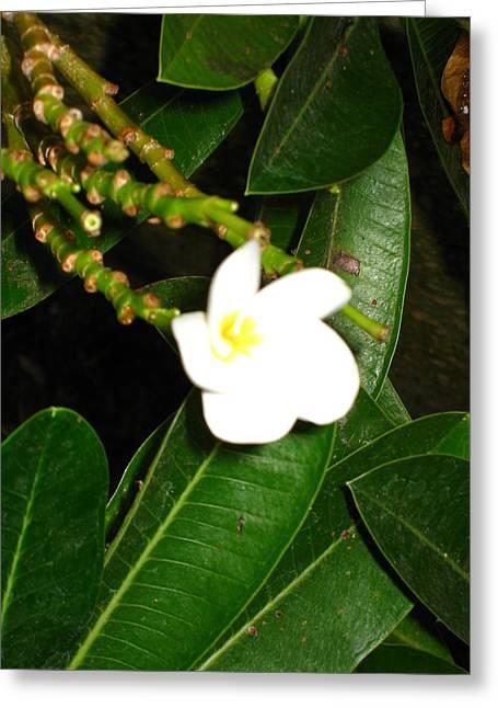 Washington Dc - Us Botanic Garden. - 121217 Greeting Card