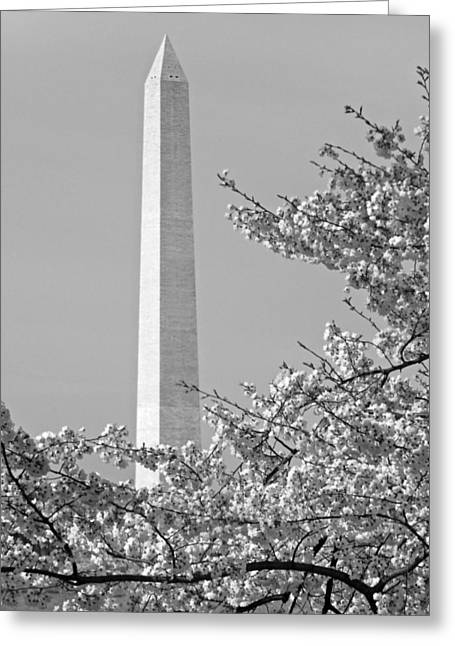 Washington Monument Amidst The Cherry Blossoms Greeting Card