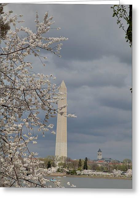 Washington Monument - Cherry Blossoms - Washington Dc - 011324 Greeting Card