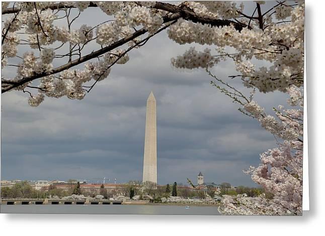 Washington Monument - Cherry Blossoms - Washington Dc - 011326 Greeting Card by DC Photographer