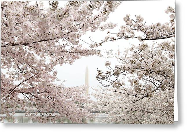 Washington Monument - Cherry Blossoms - Washington Dc - 011343 Greeting Card by DC Photographer
