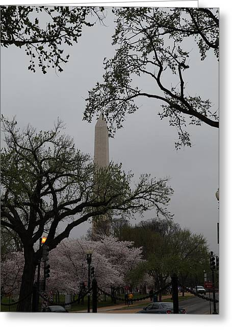 Washington Monument - Cherry Blossoms - Washington Dc - 011345 Greeting Card by DC Photographer