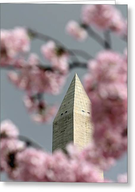 Washington Monument With Cherry Blossoms Greeting Card