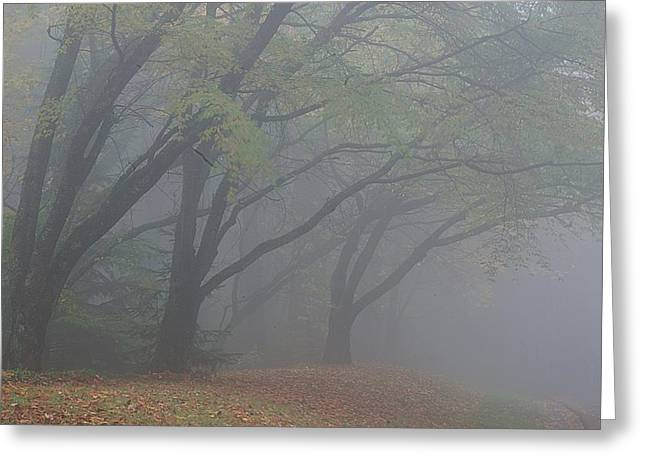Washington Park Fog 1 Greeting Card