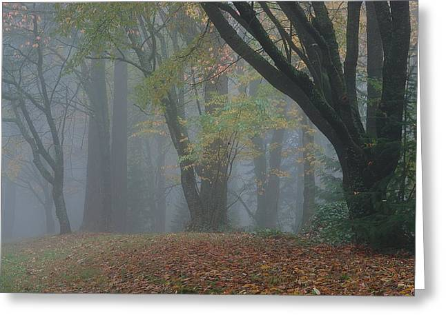 Washington Park Fog 2 Greeting Card