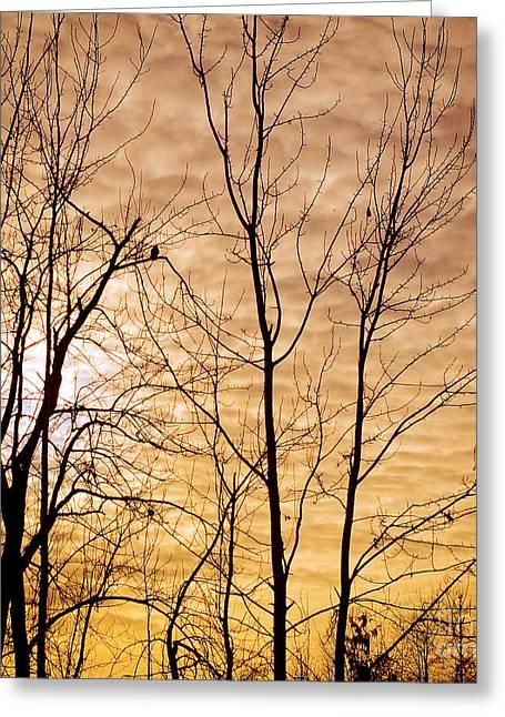 Washington's Winter Sky Greeting Card