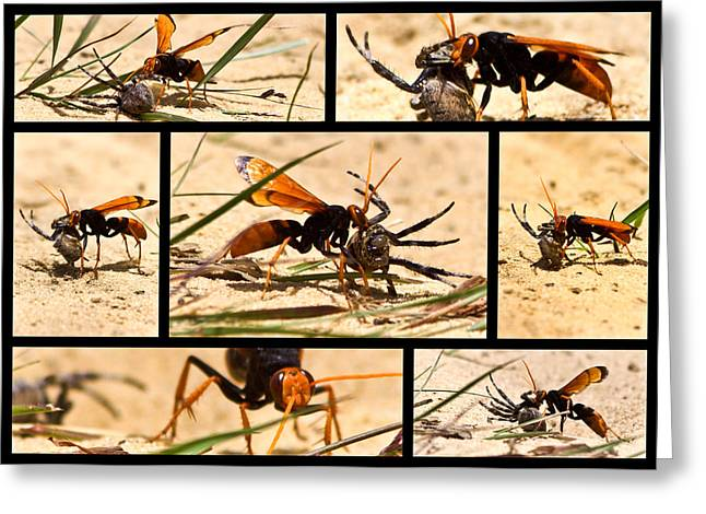 Greeting Card featuring the photograph Wasp And His Kill by Miroslava Jurcik