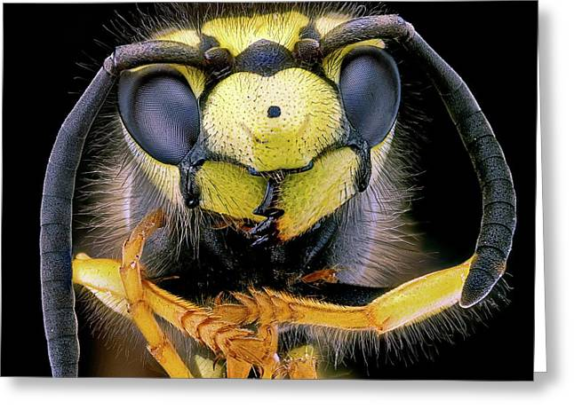 Wasp Head Greeting Card by Nicolas Reusens