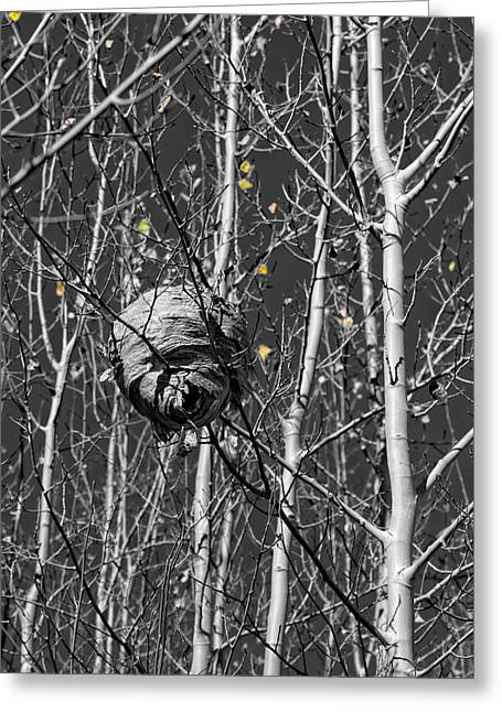 Wasp Nest In Aspen Greeting Card