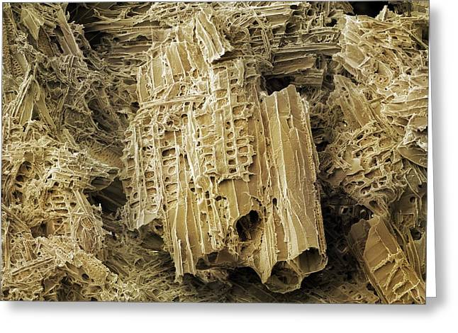 Wasp Nest Material (sem) Greeting Card by Science Photo Library