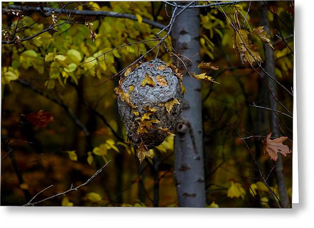 Wasp's Nest Greeting Card by Jerome Lynch