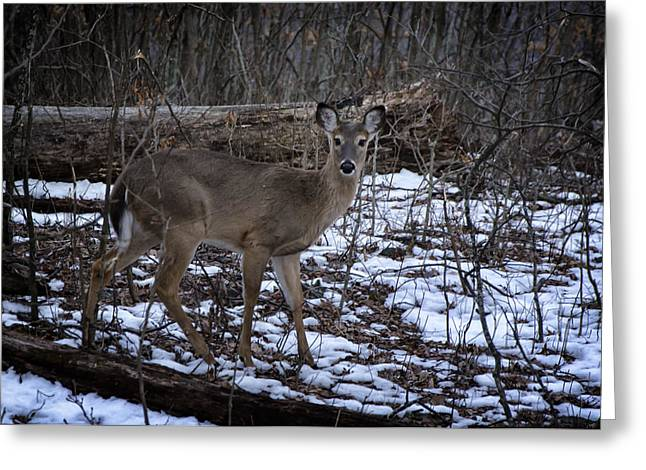 Watch Out For The Wildlife Greeting Card by Joan Carroll