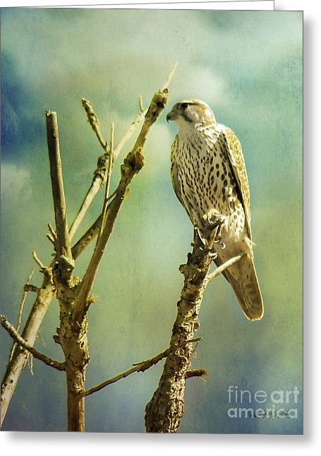 Watcher Of The World Greeting Card by Rhonda Strickland